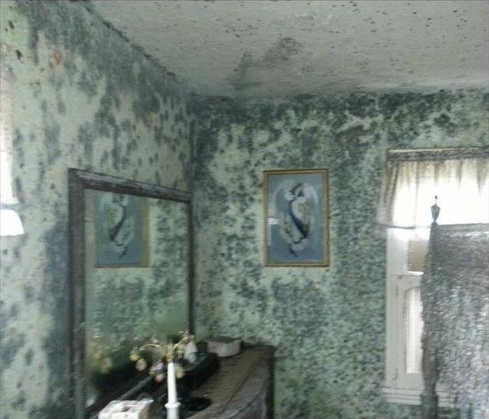 Mold Remediation in Rochester