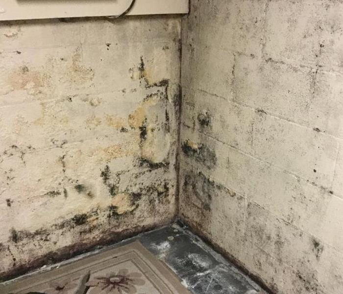 Mold Damage from Ice Damming
